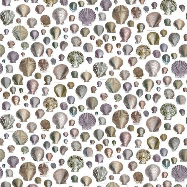 John Derian Captain Thomas Browns Shells Oyster Fabric by Designers Guild